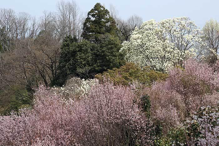 平群 里山の花木4