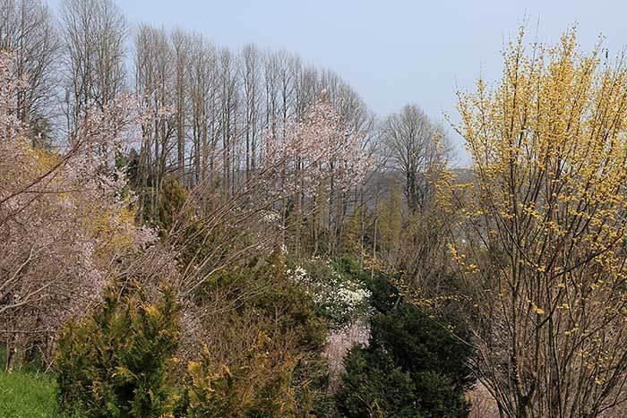 平群 里山の花木5
