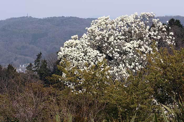 平群 里山の花木6