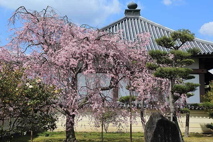 法華寺 春の花1
