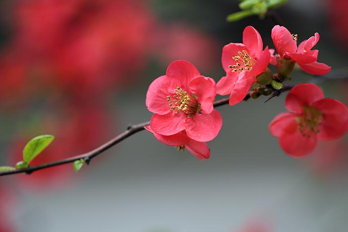 法華寺 春の花6
