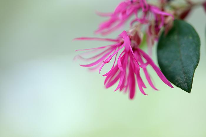 法華寺 春の花7