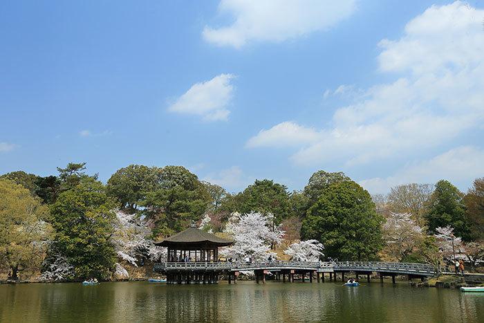 鷺池 桜1