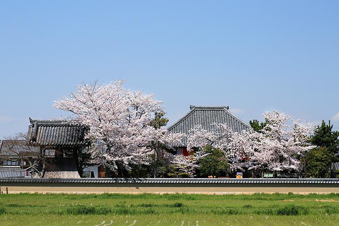 飛鳥寺 花会式5