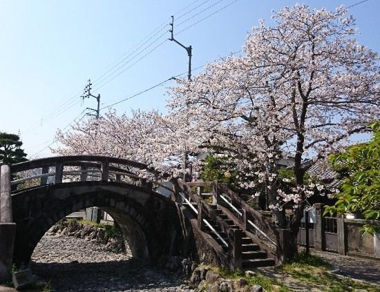 2019 4月6日 桜2