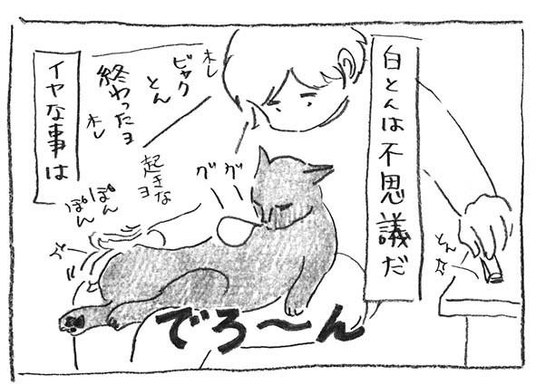 3-0404不思議猫