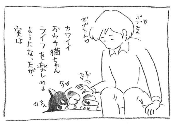 2-0409おウチ猫ライフ