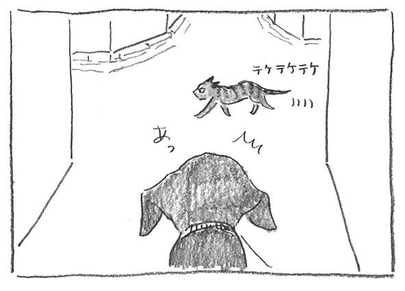 2-0418横切る猫