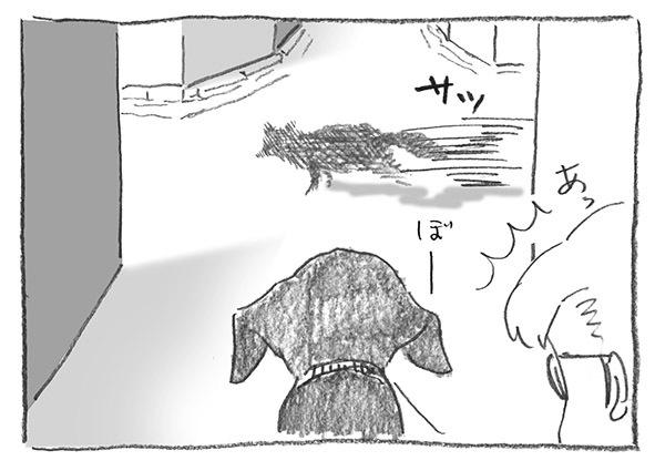 8-0418横切る狸