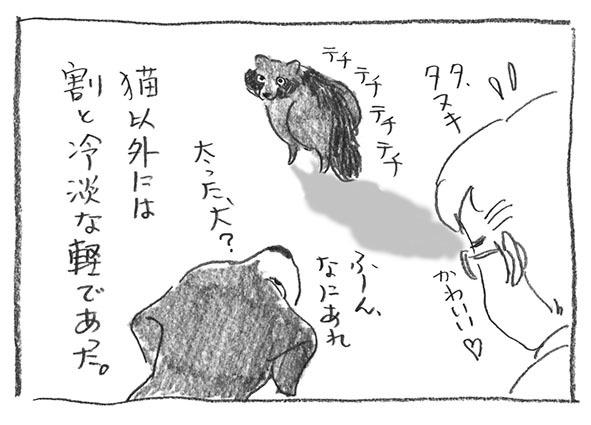 10-太った犬