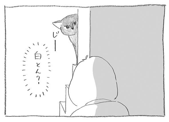 6-0501白とん