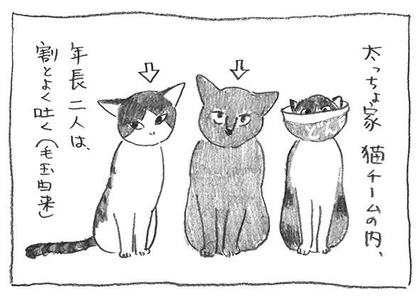 1-0516猫チーム