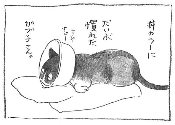 1-0517丼カラー