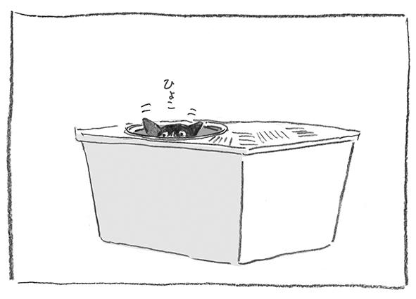 9-0517ひょこ