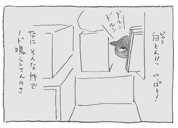 9-0521白とん