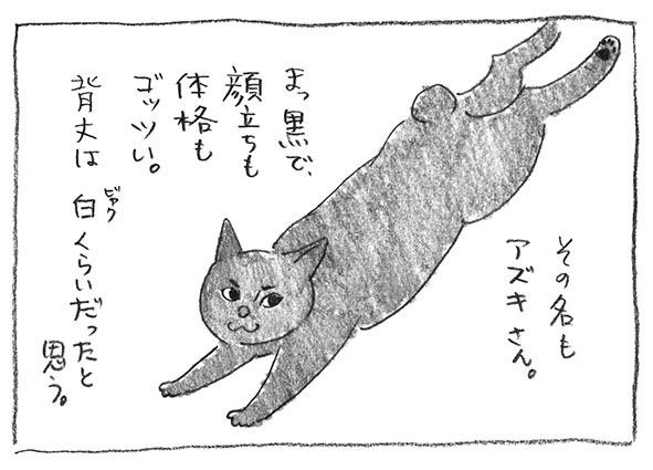 2-0524アズキ