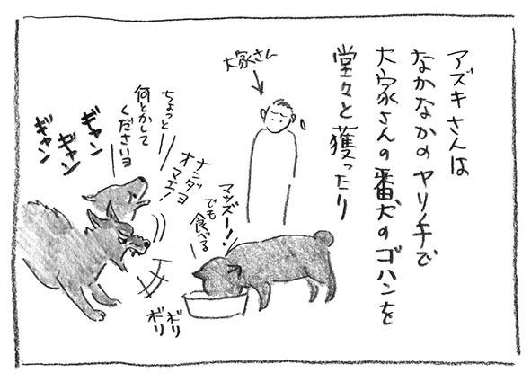4-0524犬のご飯