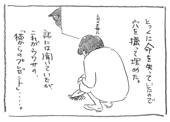 4-0526猫プレ