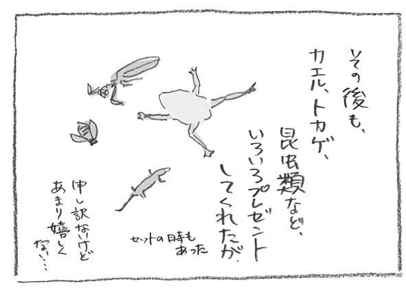 5-0526その後蛙