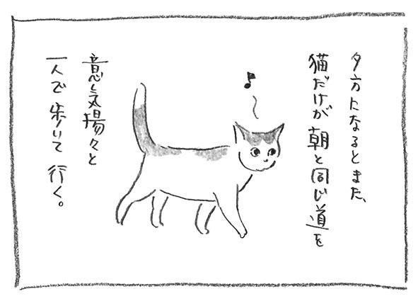 6-0528夕方猫