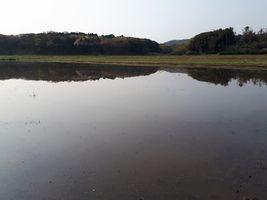 【写真】農園前の田んぼに張られた水面に映る三舟山