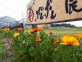【写真】受付ハウス正面にある看板と花壇のキンセンカ