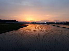 【写真】農園隣りの田んぼに映る夕焼け空