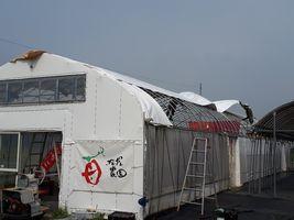 【写真】受付ハウスの天井ビニールを張り替えているところ