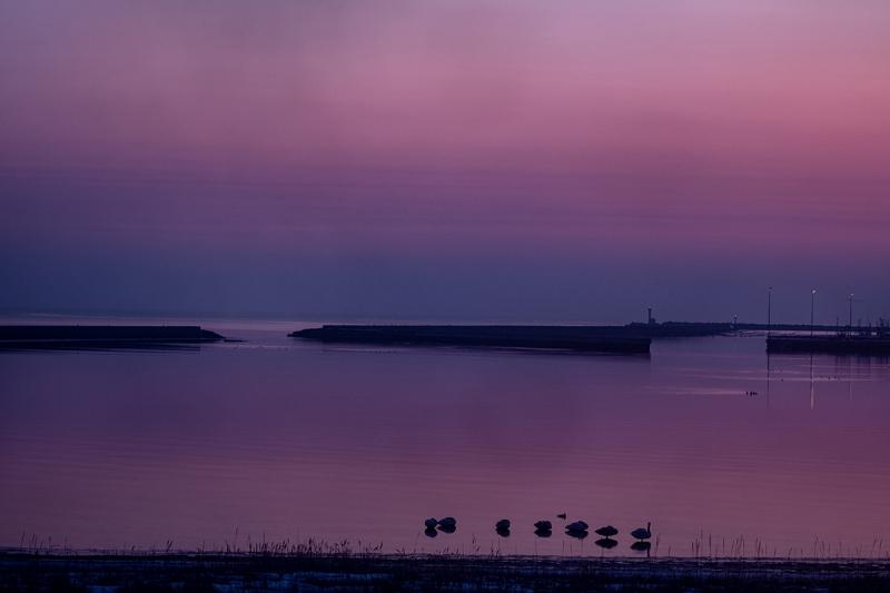 紫の朝色-1