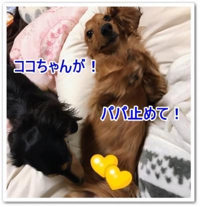 IMG_5217_convert_20190328191214.jpg