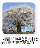 樹齢1000年と言われる岡山県の天然記念物