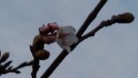 2019AddCafe桜