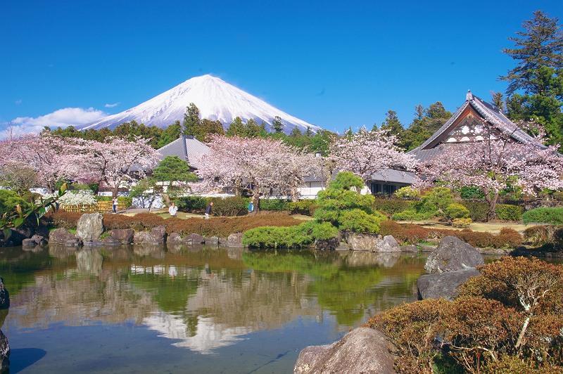 大石寺の春