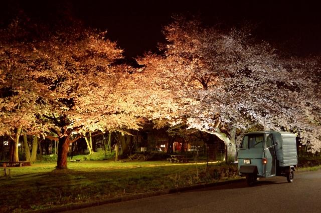 夜桜とベスパカー