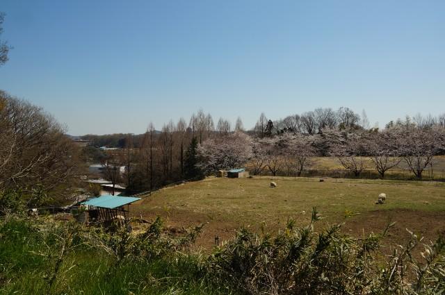 東京 八王子 磯沼牧場の昼
