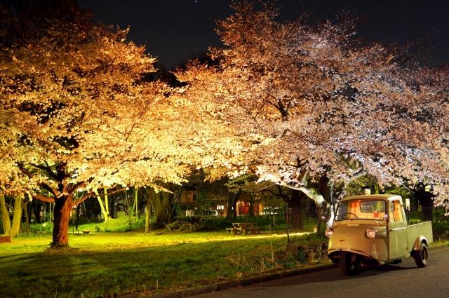 夜桜とミゼット