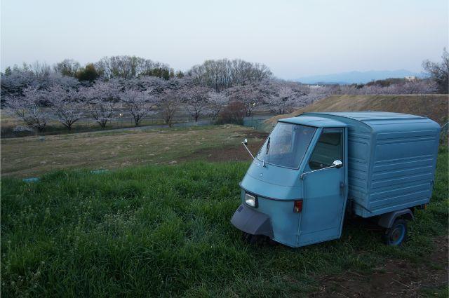 磯沼牧場の桜とピアジオベスパカー・アペ