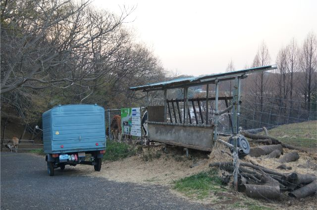 春の牛さんと牧場とピアジオベスパカー・アペ