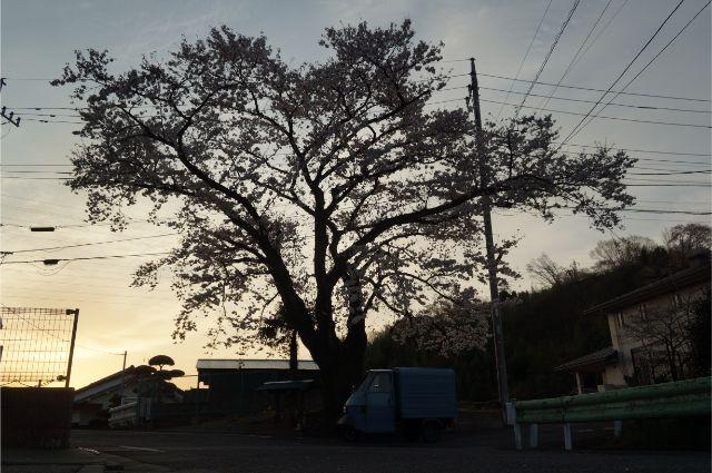 長沼の桜とピアジオベスパカー・アペ