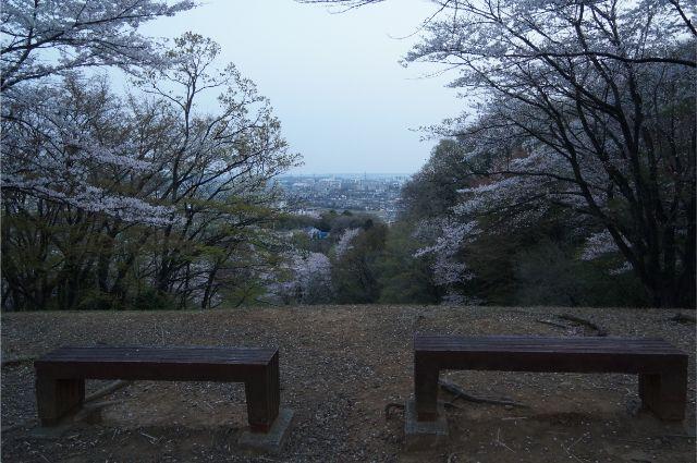 殿ガ谷の沢筋と桜