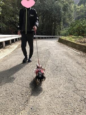 平成31年2月お散歩②