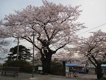 417hiyoriyama-5.jpg
