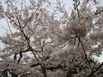 417hiyoriyama-6.jpg