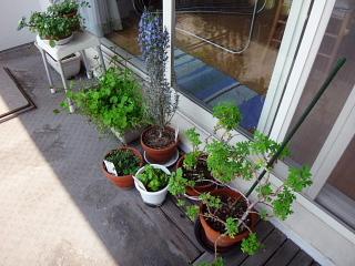ベランダの植物群