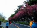 前橋渋川シティーマラソ12