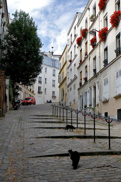 シュヴァリエ・ドゥ・ラ・バール通りの猫たち
