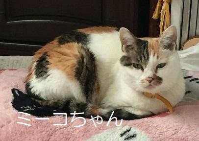 ミーコちゃん 三毛猫