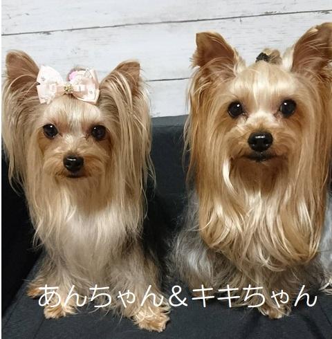 あんちゃん&キキちゃん