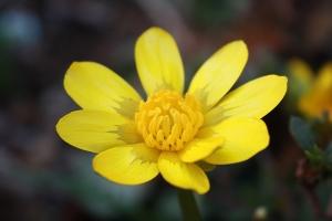 黄色い花1