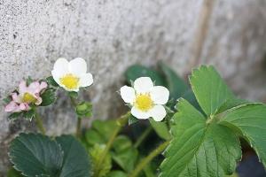 黄色い花と白い花